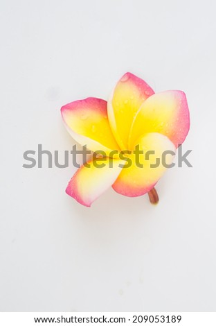 frangipani flowers - isolated, path included - stock photo