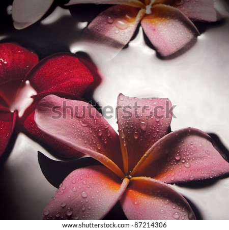 Frangipani flowers lying on water surface. Low lighting, suitable for spa related theme. - stock photo