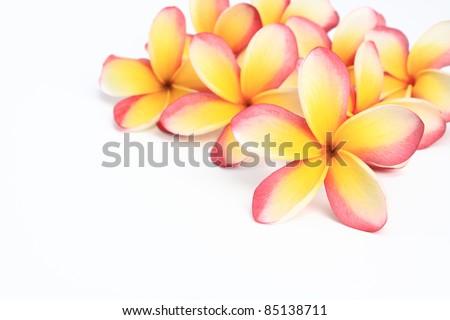 frangipani flowers on white background - stock photo