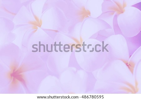 Frangipani flowers with soft and gradient style for background,abstract,texture,blurred background