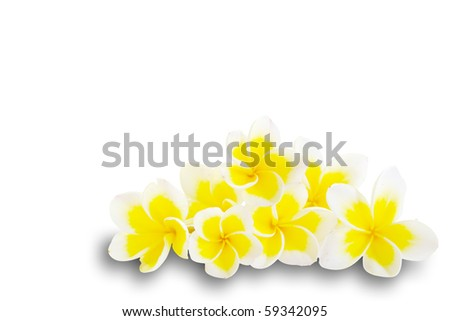 Frangipani for background an text  isolated - stock photo