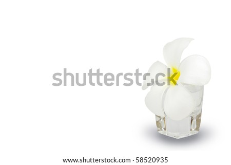 Frangipani in glass for background an text - stock photo