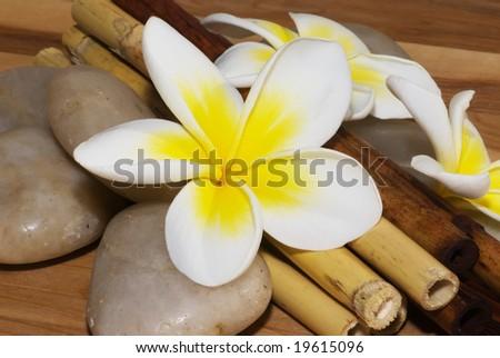Frangipani in simple decoration - stock photo