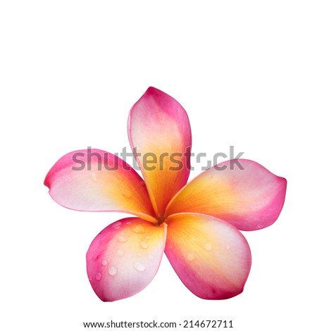 Frangipani isolated with clipping path - stock photo