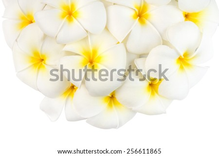 Frangipani or plumeria flowers on white background. - stock photo
