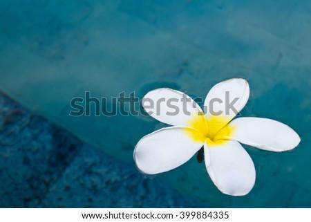 Frangipani (plumeria) flower floating on surface of swiming pool  - stock photo