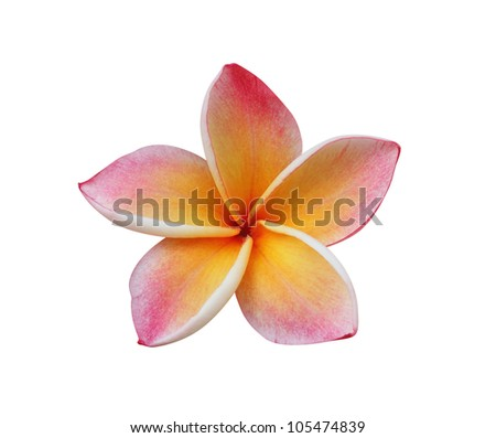 Frangipani (plumeria) flower isolated on white � clipping path included - stock photo