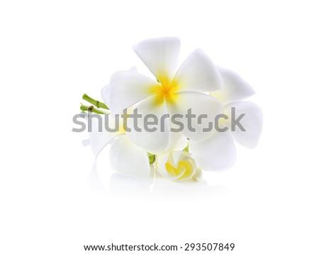 Frangipani (plumeria) flowers isolated on white - stock photo