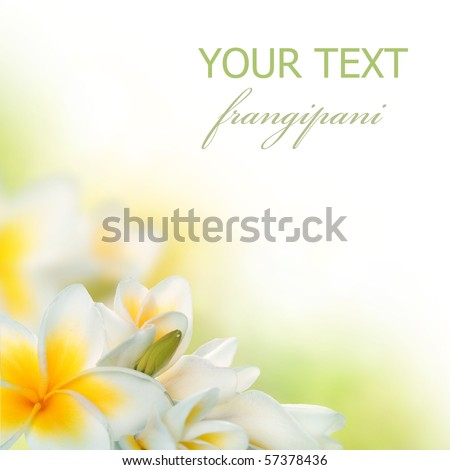 Frangipani Spa Flowers border.Plumeria - stock photo