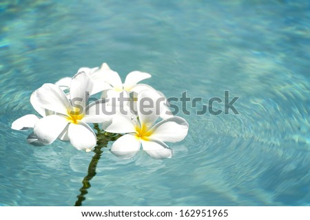 frangipani spa flowers over shiny water background-9 - stock photo