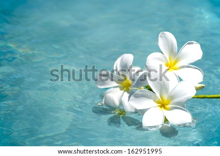frangipani spa flowers over shiny water background-14 - stock photo