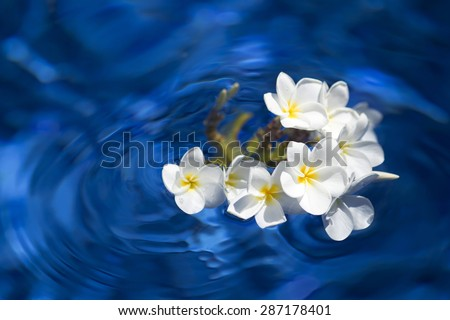 frangipani spa flowers over shiny water background-3 - stock photo