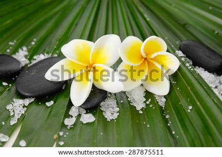frangipani with stones ,salt and palm texture   - stock photo