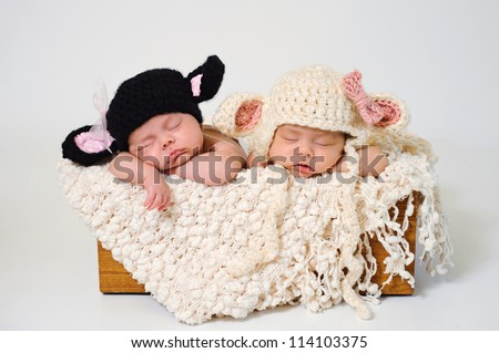 Fraternal twin newborn baby girls wearing black sheep and lamb hats. - stock photo