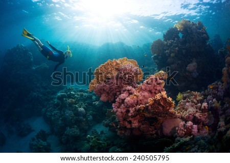 Free diver exploring vivid coral reef in tropical sea - stock photo