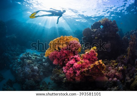 Free diver swimming underwater over vivid coral reef. Red Sea, Egypt - stock photo