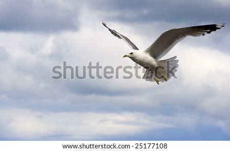 Free flying of a bird. Cloudscape. Background with an angular composition.