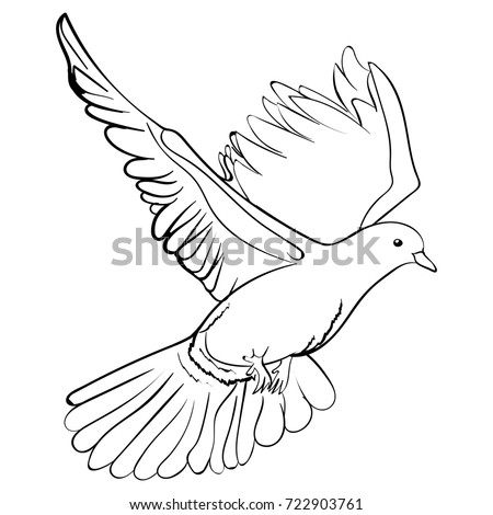 free flying white dove sketch style illustration isolated on white background hand drawing of white