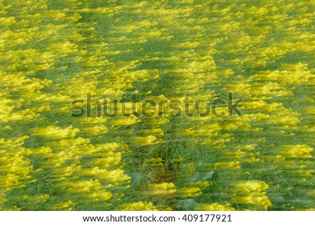 Free Hand Abstract Shooting Rapeseed Field at Jeju, South Korea.