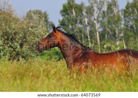 free horse in field - stock photo