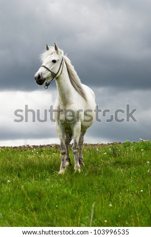 Free white horse in the summer field