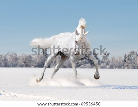 free white horse in winter background - stock photo