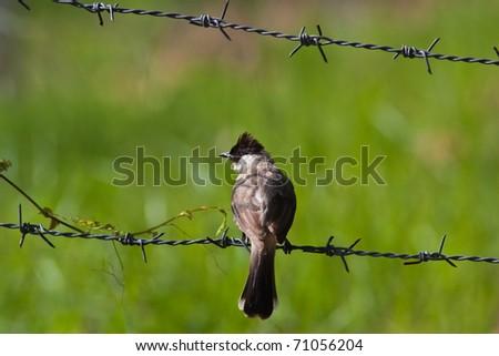 Freedom? - stock photo