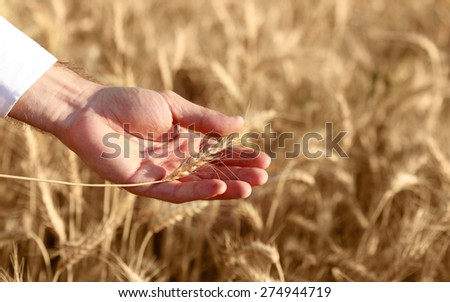 Freedom and nature concepts. - stock photo