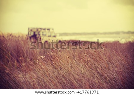 Freedom in the summer concept, wild plants with blur beach landscape and retro car background. - stock photo