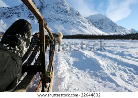 Freedom of dog sledging above the Arctic Circle