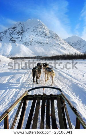 Freedom of dog sledging above the Arctic Circle - stock photo