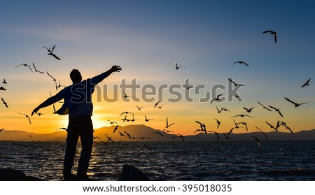 freedom, peace and seagulls - stock photo
