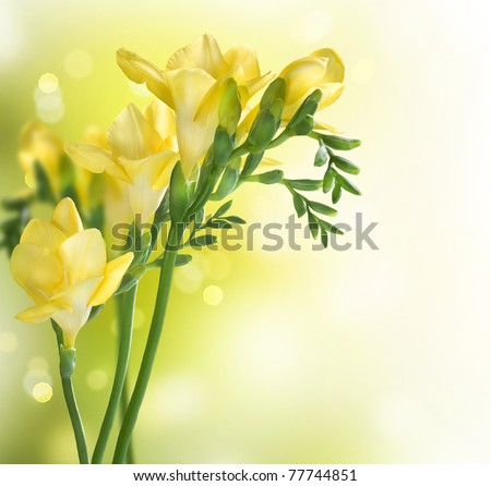 Freesia Flowers border design - stock photo