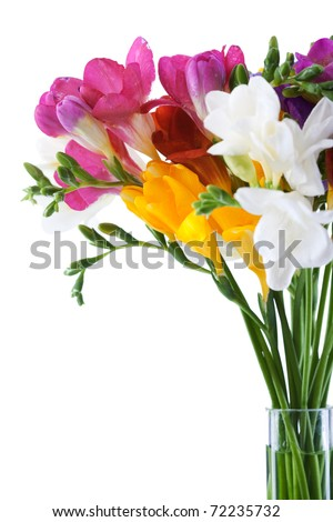 freesia  flowers isolated on the white  background - stock photo