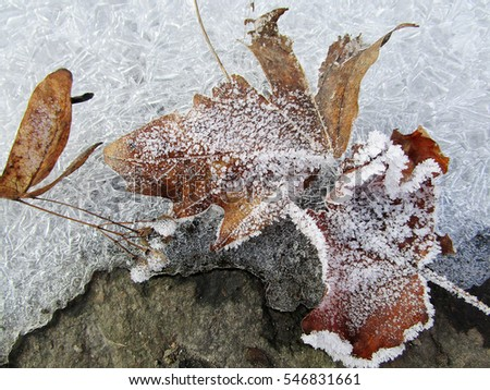 Freeze leaves on ice