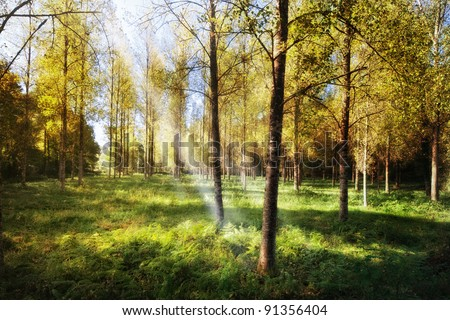 French autumn forest - stock photo