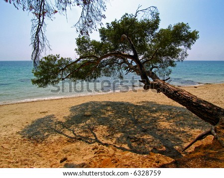 French beach with cluster pine