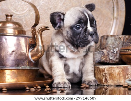 French Bulldog and coffee - stock photo