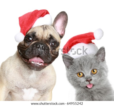 French bulldog and kitten in red Christmas cap on a white background - stock photo