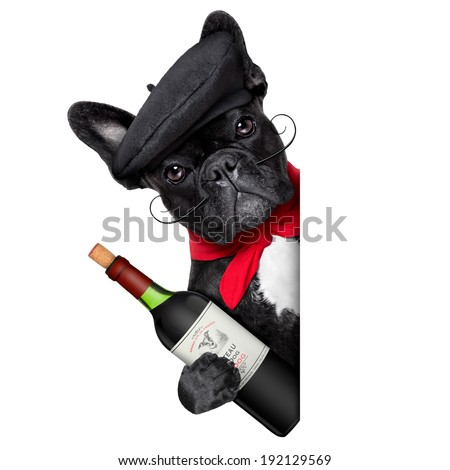 french bulldog behind a white and blank banner - stock photo