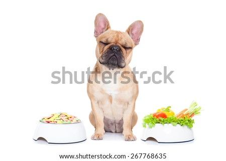 french bulldog  dog has the choice between right healthy  and wrong unhealthy  food, isolated on white background - stock photo