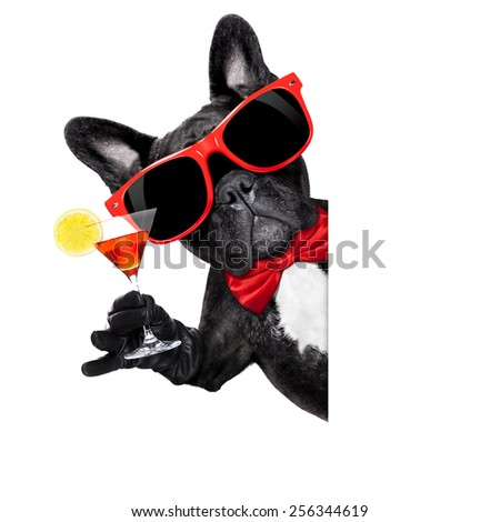 french bulldog dog holding martini cocktail glass ready to have fun and party,behind a white blank banner or placard, isolated on white background - stock photo