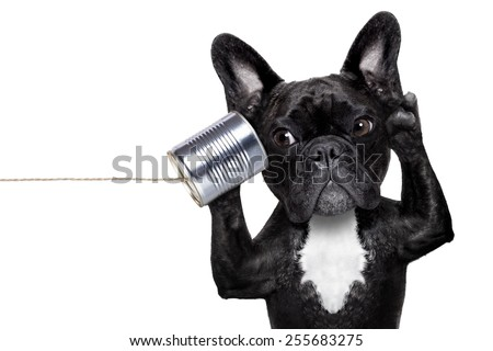 french bulldog dog listening or talking on the can telephone, isolated on white background - stock photo