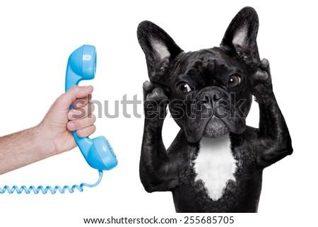 french bulldog dog listening or talking on the phone or  telephone, isolated on white background - stock photo
