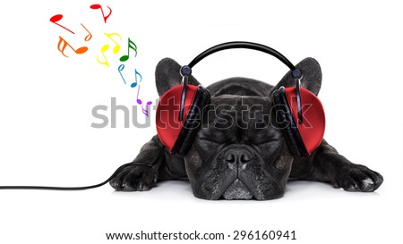 french bulldog dog listening to music with earphones or headphones,while relaxing or sleeping on the floor, isolated on white background - stock photo