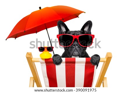 french bulldog dog   on a  beach chair or hammock at the beach relaxing  on summer vacation holidays,with red umbrella, isolated on white background - stock photo