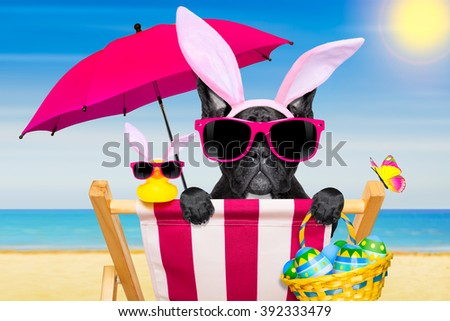 french bulldog dog on a hammock , during easter holidays, with bunny ears, at the beach, in spring - stock photo