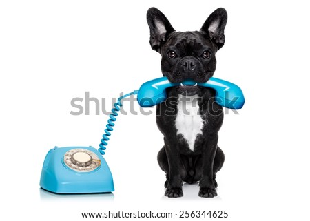 french bulldog dog on the phone or telephone in mouth, isolated on white background - stock photo