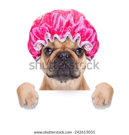 french bulldog dog ready to have a bath or a shower wearing a bathing cap, isolated on white background - stock photo