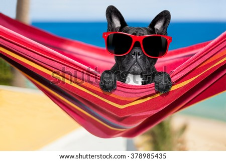 french bulldog dog relaxing on a fancy red  hammock  with red sunglasses, on summer vacation holidays at the beach - stock photo